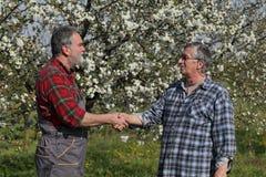 Agricoltore ed agronomo nel frutteto di ciliegia sbocciante Immagini Stock