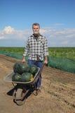 Agricoltore ed anguria Fotografie Stock