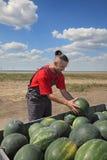 Agricoltore ed anguria Immagine Stock Libera da Diritti
