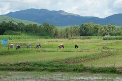 Agricoltore ed archivato, Nan, Tailandia Fotografie Stock