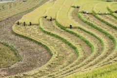 Agricoltore ed azienda agricola Immagine Stock Libera da Diritti