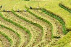 Agricoltore ed azienda agricola Immagine Stock
