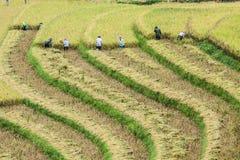 Agricoltore ed azienda agricola Immagini Stock