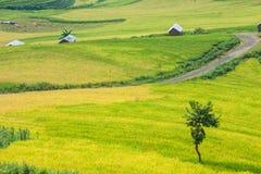 Agricoltore ed azienda agricola Fotografia Stock