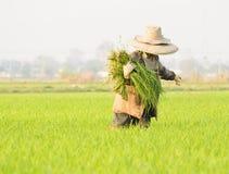 Agricoltore ed erba Fotografia Stock Libera da Diritti