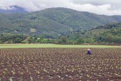 Agricoltore ed il suo giardino Fotografie Stock