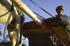 Agricoltore egiziano Riding un trasporto con un asino sulla strada, Il Cairo, Egitto Fotografie Stock