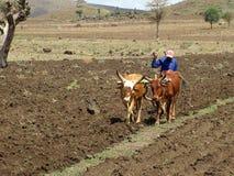 Agricoltore in Etiopia Fotografia Stock Libera da Diritti