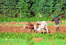 Agricoltore etiopico Fotografie Stock