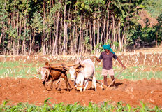 Agricoltore etiopico Immagine Stock