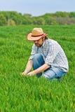 Agricoltore Examines e giovane campo di coltivazione del grano di comandi Fotografia Stock Libera da Diritti