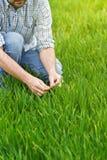 Agricoltore Examines e giovane campo di coltivazione del grano di comandi Immagine Stock Libera da Diritti