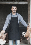Agricoltore felice dell'uomo che tiene due polli per le gambe Immagine Stock