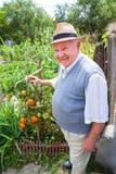 Agricoltore felice fiero della sua coltivazione del pomodoro Fotografia Stock