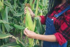 Agricoltore felice nel campo di grano Fotografia Stock Libera da Diritti