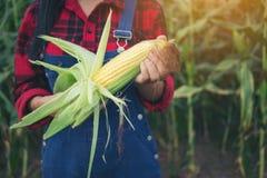 Agricoltore felice nel campo di grano Fotografie Stock