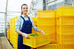 Agricoltore femminile Fotografie Stock