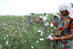 Agricoltore femminile Immagine Stock Libera da Diritti