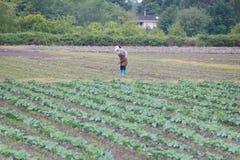 Agricoltore femminile Immagini Stock