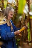 Agricoltore femminile anziano al raccolto di cereale Fotografie Stock
