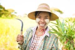 Agricoltore femminile birmano maturo tradizionale Fotografie Stock