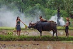 Agricoltore femminile in campagna facendo uso del bufalo all'aratura per il ri Fotografie Stock Libere da Diritti