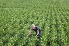 Agricoltore femminile che esamina la pianta di soia verde nel campo Fotografia Stock Libera da Diritti