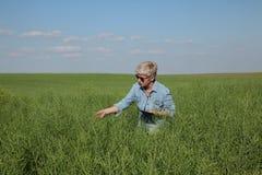 Agricoltore femminile che ispeziona il raccolto del seme di ravizzone nel campo Immagini Stock Libere da Diritti