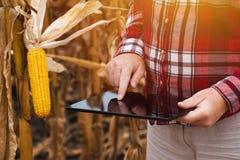 Agricoltore femminile che lavora al computer della compressa nel campo di grano Fotografie Stock Libere da Diritti