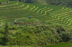 Agricoltore femminile che lavora la terra ai terrazzi del riso di Longsheng vicino al del villaggio di Dazhai nella provincia del Fotografie Stock