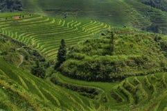 Agricoltore femminile che lavora la terra ai terrazzi del riso di Longsheng vicino al del villaggio di Dazhai nella provincia del Immagini Stock