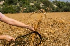 Agricoltore femminile che posa nel giacimento di grano coltivato Immagine Stock Libera da Diritti