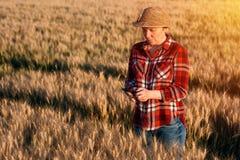 Agricoltore femminile che sta nel giacimento di grano e che per mezzo del telefono cellulare Fotografie Stock