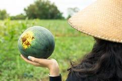 Agricoltore femminile che tiene anguria di recente selezionata Fotografia Stock Libera da Diritti