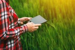 Agricoltore femminile che utilizza compressa nel campo del raccolto del grano Immagini Stock