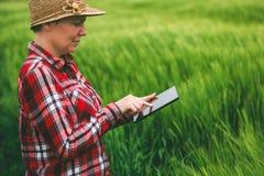 Agricoltore femminile che utilizza il computer della compressa nel campo del raccolto del grano Fotografie Stock Libere da Diritti