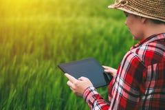Agricoltore femminile che utilizza il computer della compressa nel campo del raccolto della segale Immagine Stock