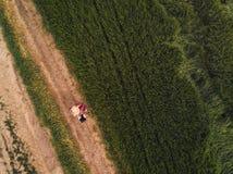 Agricoltore femminile che utilizza il computer digitale della compressa nel giacimento di grano verde Immagine Stock