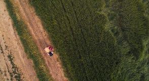 Agricoltore femminile che utilizza il computer digitale della compressa nel giacimento di grano verde Immagini Stock