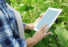 Agricoltore femminile con il computer della compressa Fotografie Stock