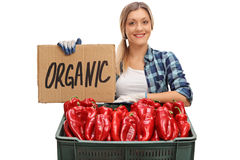 Agricoltore femminile con la cassa piena dei peperoni e del segno Fotografie Stock Libere da Diritti