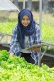 Agricoltore femminile con la compressa Immagine Stock Libera da Diritti