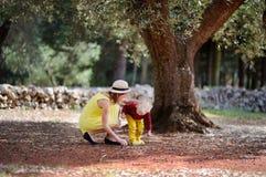 Agricoltore femminile e suo piccolo l'assistente che lavorano nell'oliveto in Italia Immagine Stock Libera da Diritti