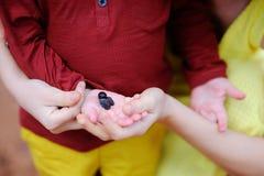 Agricoltore femminile e suo piccolo l'assistente che lavorano nell'oliveto in Italia Foto del primo piano delle mani con oliva Immagine Stock Libera da Diritti