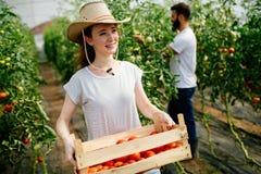 Agricoltore femminile felice attraente che lavora nella serra Immagini Stock