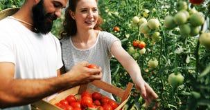 Agricoltore femminile felice attraente che lavora nella serra Immagine Stock Libera da Diritti
