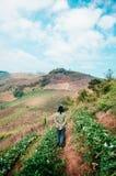 Agricoltore femminile, giardiniere che cammina nell'azienda agricola della fragola sulle colline in C Fotografia Stock