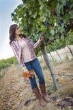 Agricoltore femminile Inspecting l'uva in vigna Immagini Stock