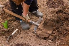 Agricoltore femminile in stivali di gomma che didgging nel giardino Giardiniere che scava nel giardino Suolo che prepara per la p Immagine Stock