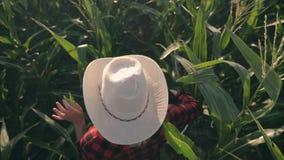 Agricoltore femminile in un campo di mais Lavoro agricolo del raccolto su un campo di mais video d archivio